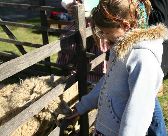 First State Heritage Park: Sheep from Greenbank Mill came to Market Fair