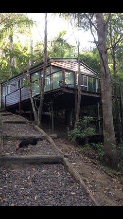 蒙特維爾樹屋照片