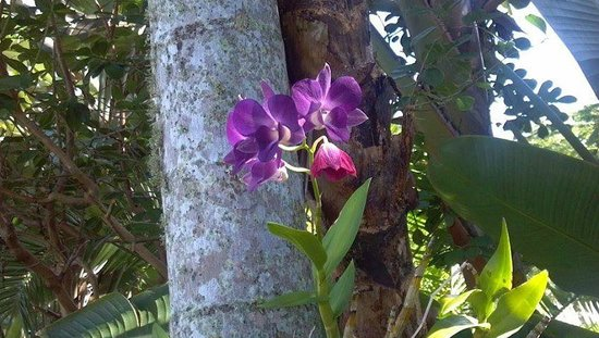 Blue Dolphin Cottages: orchid on a tree