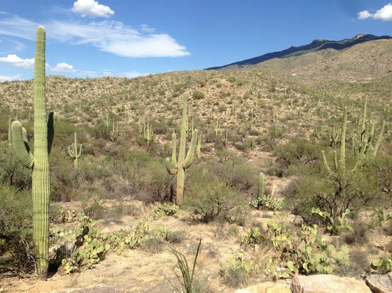 Tucson Mountain Park: Saguaro and ... Saguaro :)
