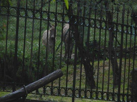 Albergo Ristorante La Macchia: The resident donkeys! Adorable!