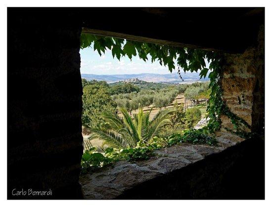 Azienda Agrituristica Bio Le Macchie Alte: vista dalle camere su Montemerano