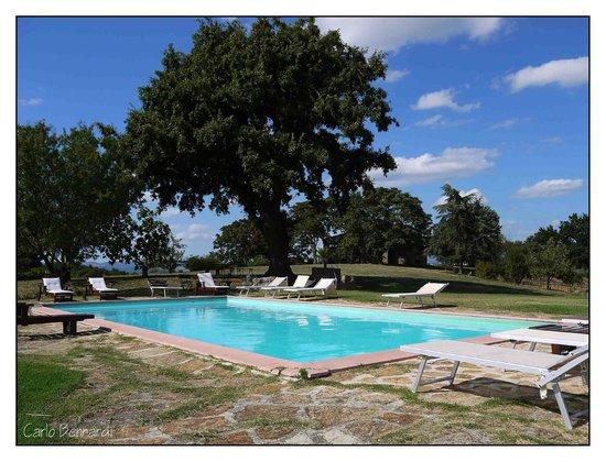 Azienda Agrituristica Bio Le Macchie Alte: la piscina sotto la quercia