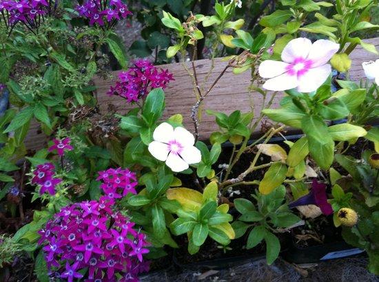 Garden at Ocean Breeze Hideaway