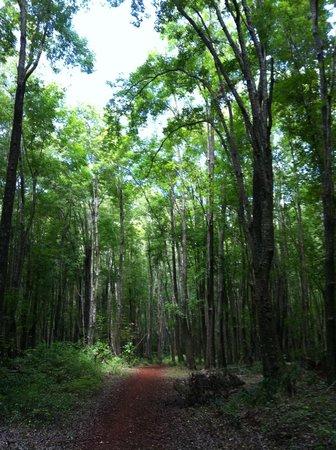 Ocean Breeze Hideaway: Walk in the forest
