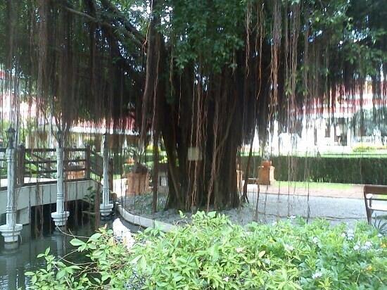 Wora Bura Hua Hin Resort & Spa: Just look at this beautiful tree!