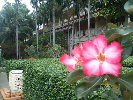Wora Bura Resort & Spa: One of many beautiful flowers in the garden!