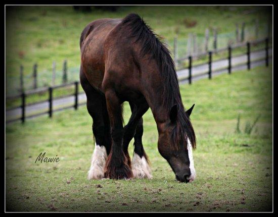 Cooper's Hill Equine : Midnight