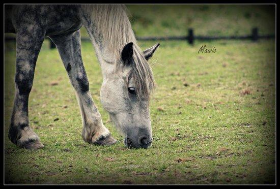 Cooper's Hill Equine : Dapple Dancer
