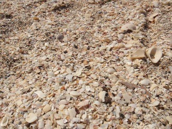 Manasota Key Beach : Shell time