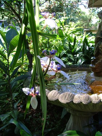 Bay Breeze Bed & Breakfast: another view of gardens