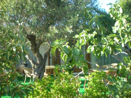 Ragno d'Oro Club Hotel: Giardino
