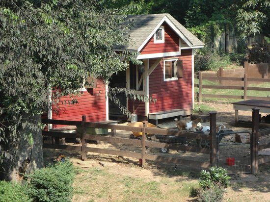 The Social Goat Bed & Breakfast: where the critters live part 2