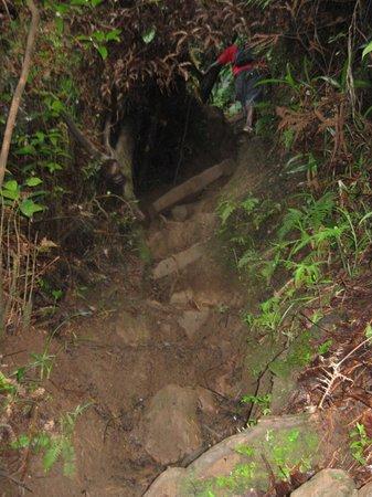 Nevis Peak Hike: My guide ahead of me. Straight up.