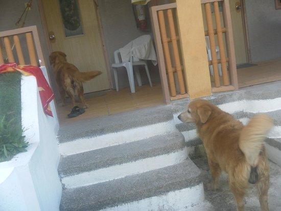 Alice in Wonderland Beach Resort: Наши друзья собаки