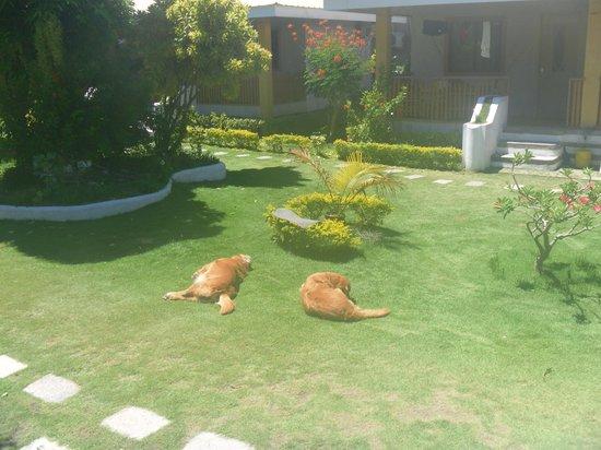Alice in Wonderland Beach Resort: Собаки отдыхают на лужайке