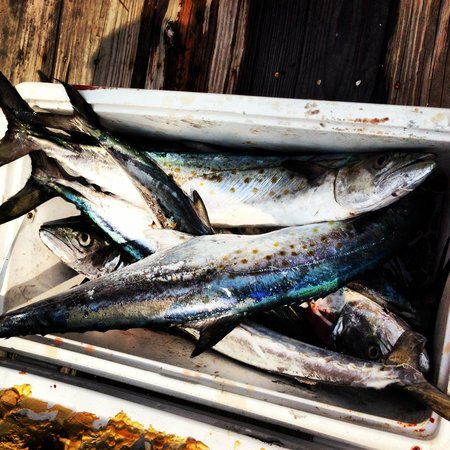 Catch-1 Charters - Capt. Shannon's Fishing Charters: Cooler full of Spanish mackerel