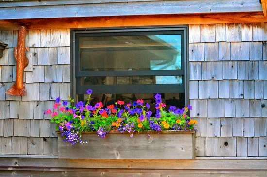 Angry Trout Cafe: Flower box