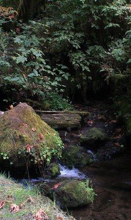 Munson Creek Falls: Muson Creek along the path to the falls