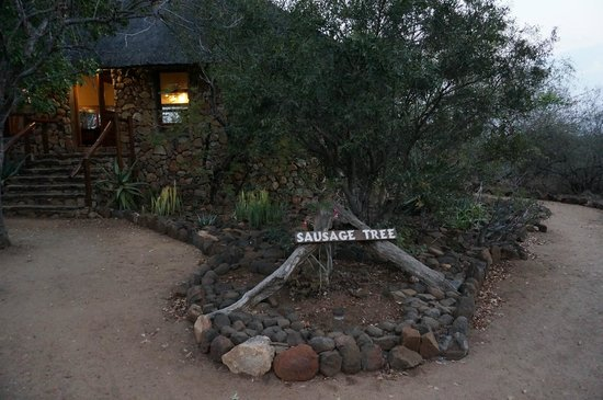 Sausage Tree Safari Camp : Entrance to the main lodge building