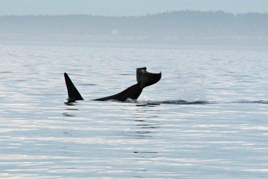 Western Prince Whale & Wildlife Tours : Hello my friend