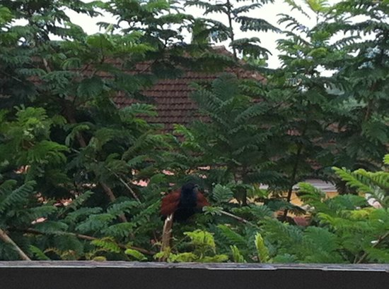 Afonso Guest House: Birdwatching from the rooftop terrace in the afternoon!!!