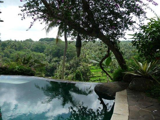 Taman Bebek Resort & Spa: view of the pool!