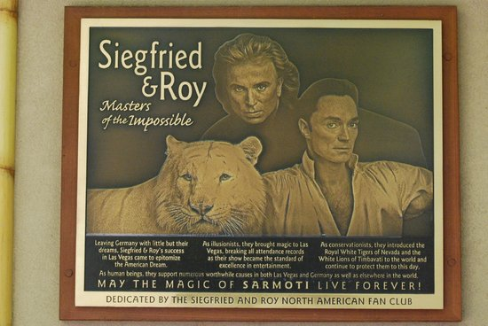Tribute To Siegfried And Roy Picture Of White Tiger