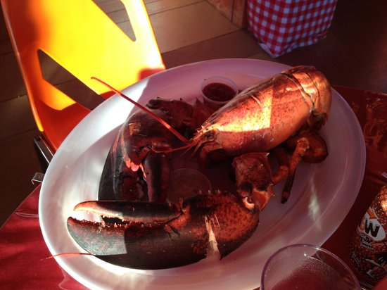 Doyle Sansome & Sons Lobster Pool: Ll cool claws lol