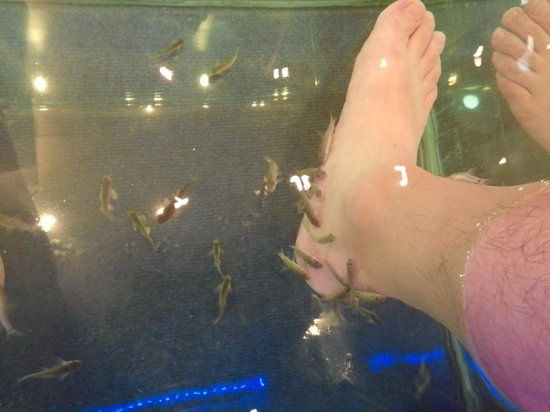Inside 2 picture of athens doctor fish foot therapy for Fish foot spa