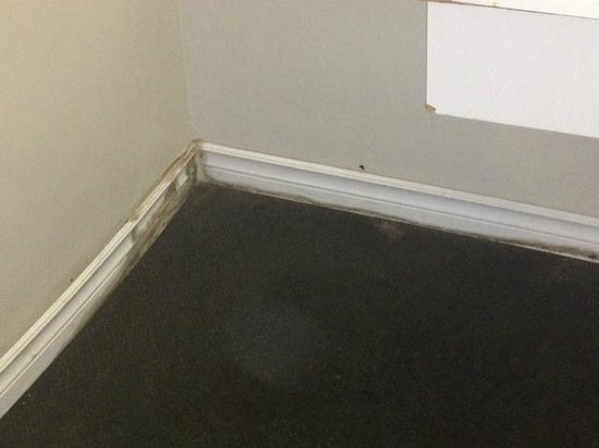 Northwoods Inn & Suites: Mould all over the room floor and baseboards