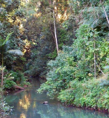 Malanda Falls Caravan Park: Malanda Falls