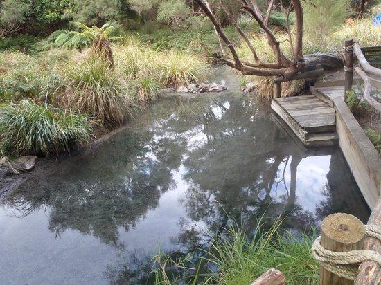 Totally Tarawera: Hot Bush Pool