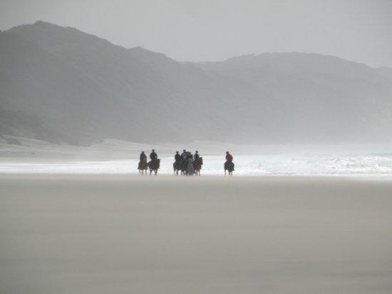 Bhangazi Horse Safaris: cavalcata sulla spiaggia di St. Lucia