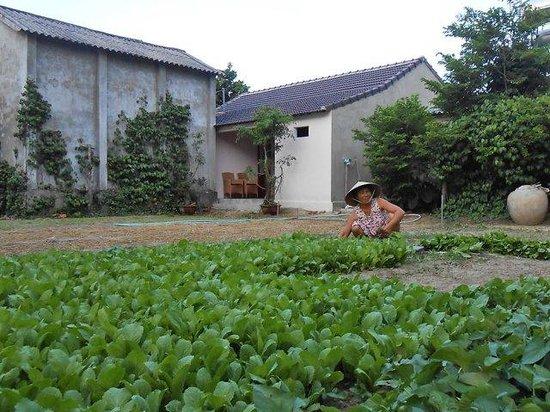 Petunia Garden Homestay : Petunia Garden