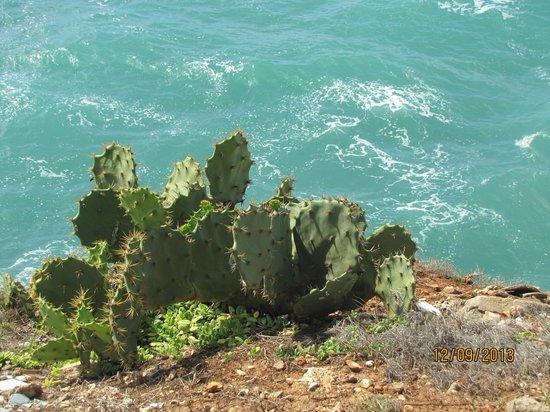 Golden Tulip Dar Es Salaam: Cactus