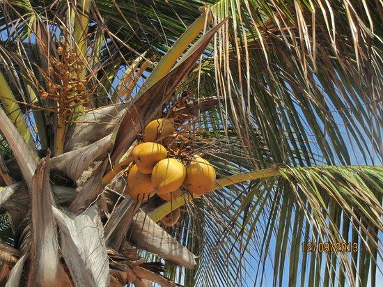 Golden Tulip Dar Es Salaam: Coco