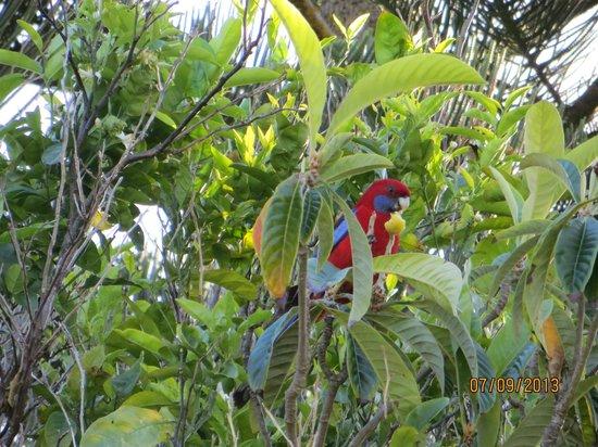 Broad Leaf Villas: Regular visiter throughout the day
