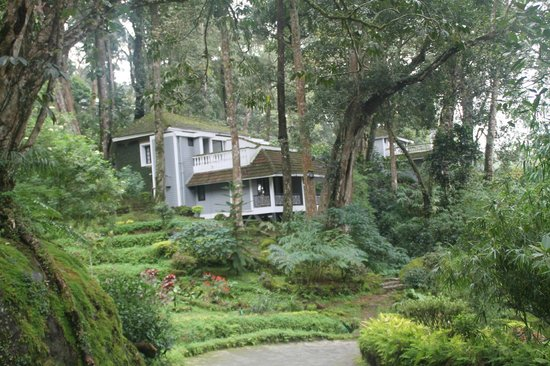 The Tall Trees Munnar: view frm reception