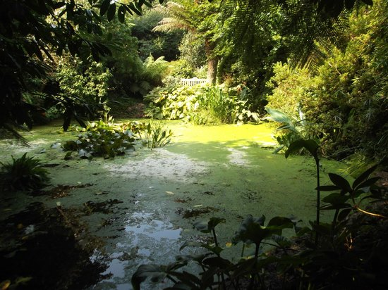 Trengwainton Garden: Tranqual Pool In The Sunshine