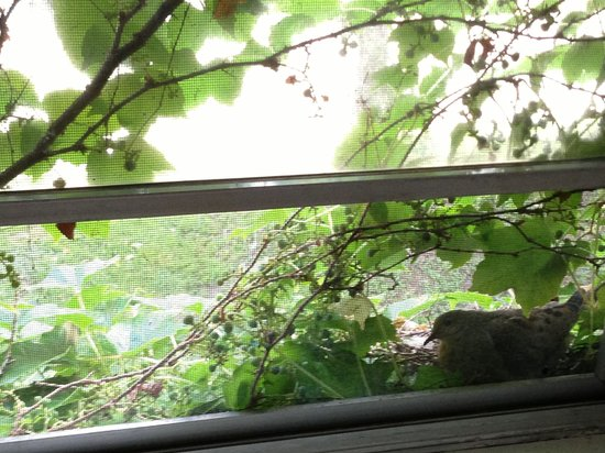 Edmund B&B : Look for the dove in the bottom of window clutching her eggs