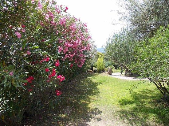 Hotel Club Saraceno : vista parco