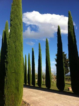Hotel Casolare le Terre Rosse: Hotel Entrance - Cyprus trees