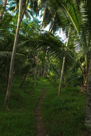 Green Canyon: Pad door de jungle langs de river
