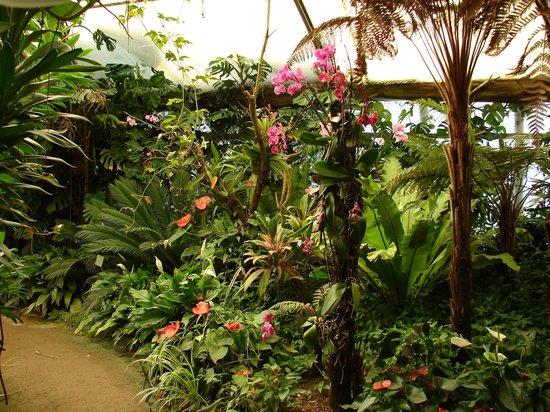 Parc Floral et Tropical de la Court d'Aron: serre tropicale