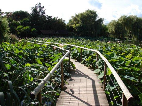 Parc Floral et Tropical de la Court d'Aron: pont qui passe au travers des nénuphars