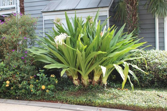 Maison St. Charles Hotel and Suites: Beautiful landscaping.