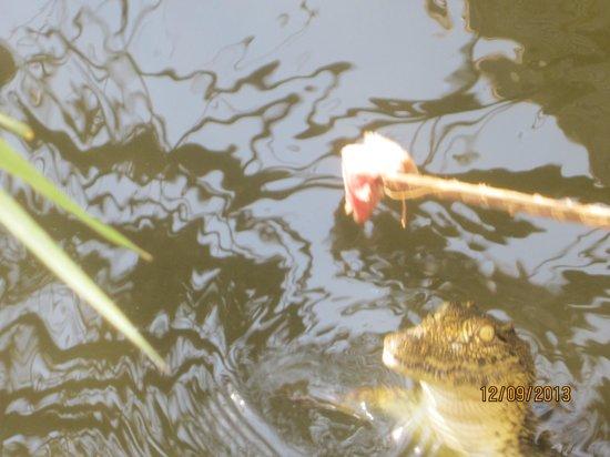 Southern Sun Ridgeway: Feed a crocodile while you enjoy breakfast