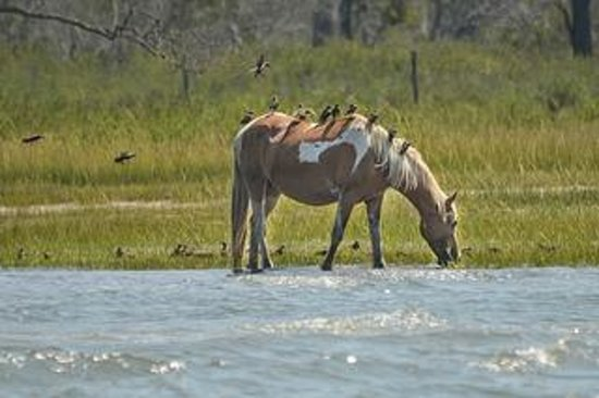 Chincoteague Island Tours