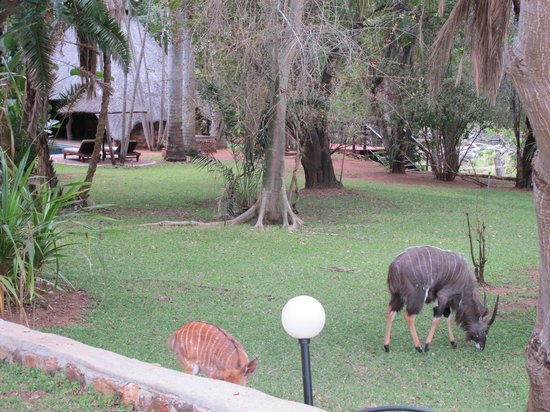 Blyde River Wilderness Lodge: jardin